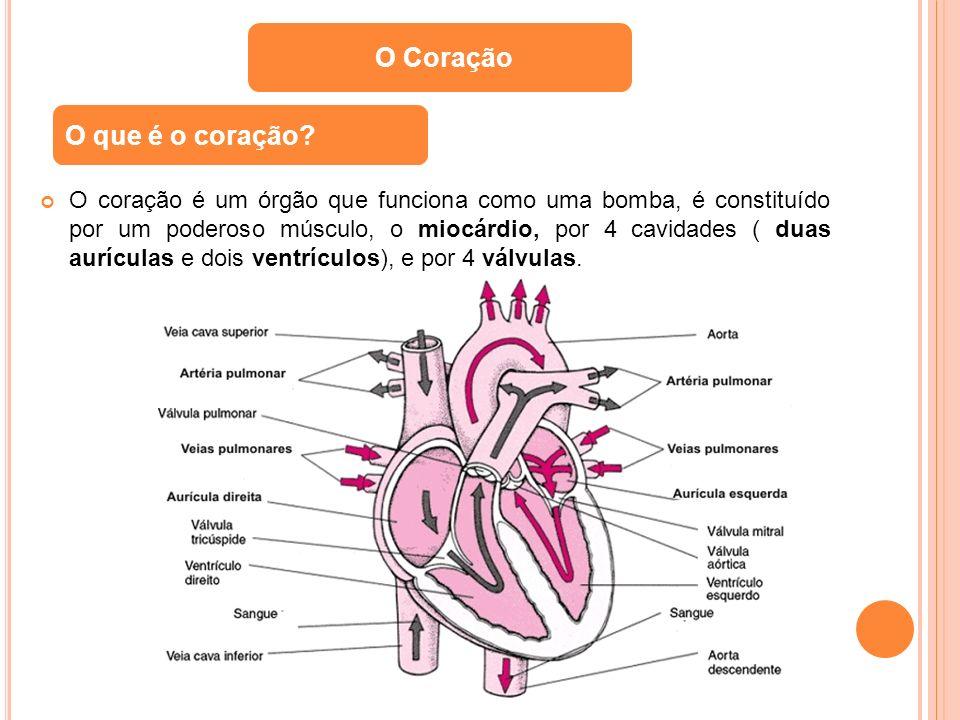O Coração O que é o coração