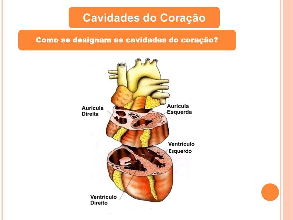 Como se designam as cavidades do coração