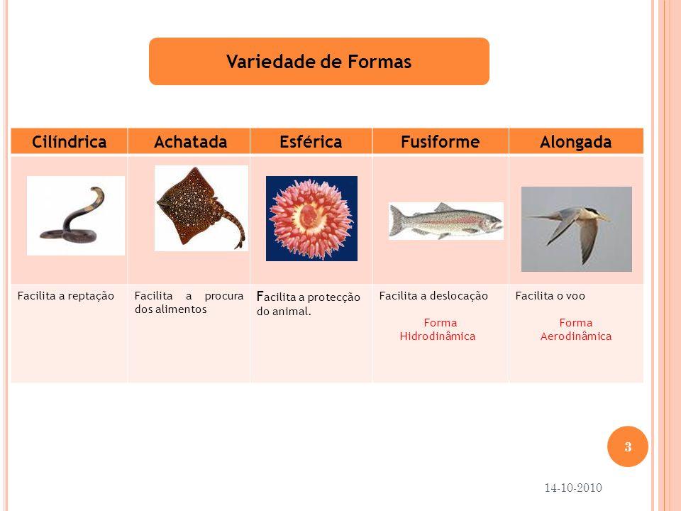 Variedade de Formas Cilíndrica Achatada Esférica Fusiforme Alongada