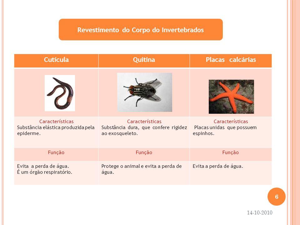 Revestimento do Corpo do Invertebrados