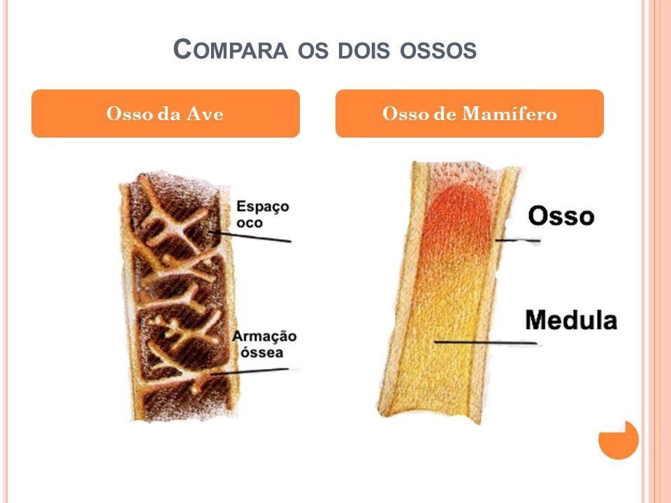 Compara os dois ossos Osso da Ave Osso de Mamífero