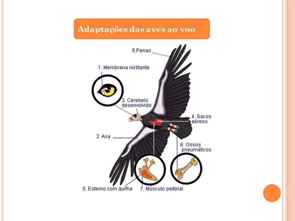 Adaptações das aves ao voo