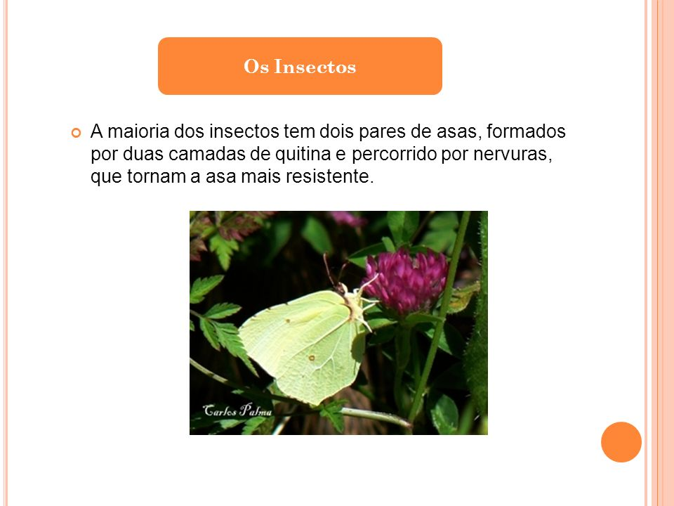 Os Insectos