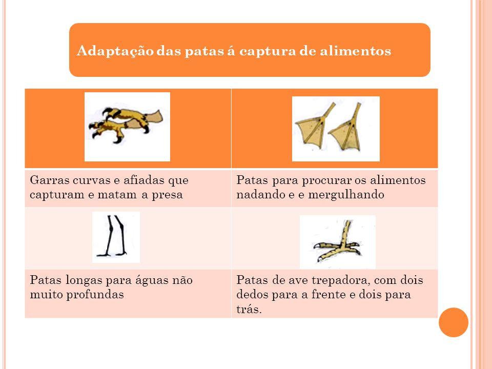 Adaptação das patas á captura de alimentos