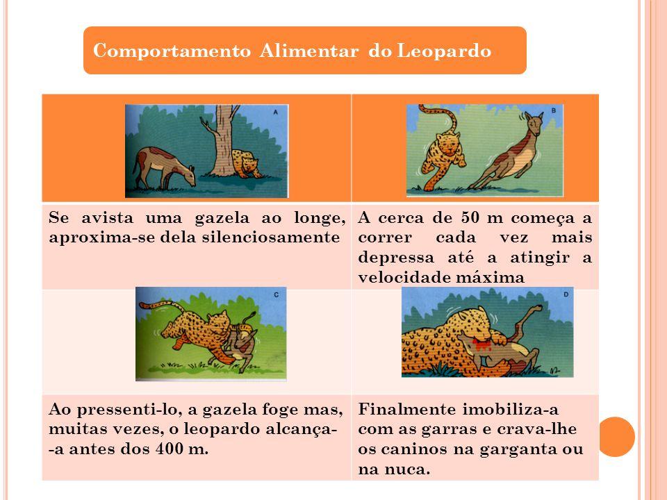 Comportamento Alimentar do Leopardo