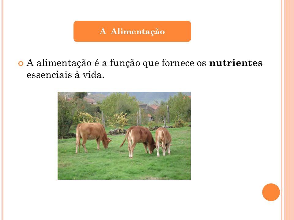 A alimentação é a função que fornece os nutrientes essenciais à vida.