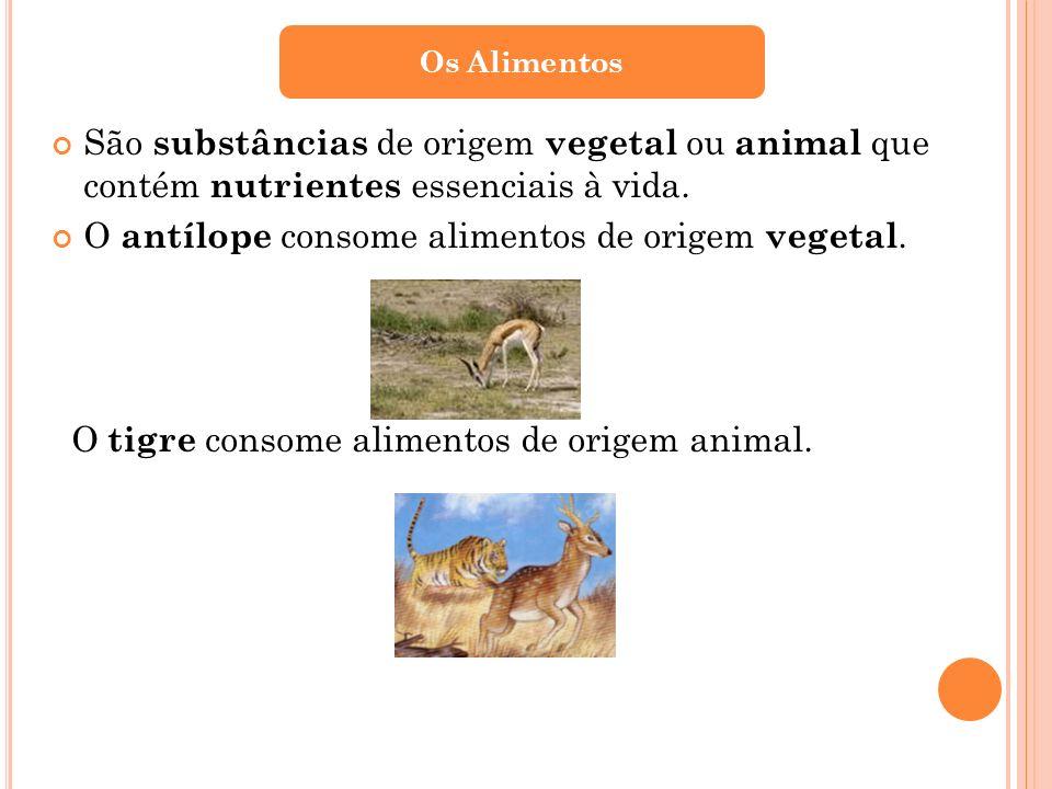 O antílope consome alimentos de origem vegetal.