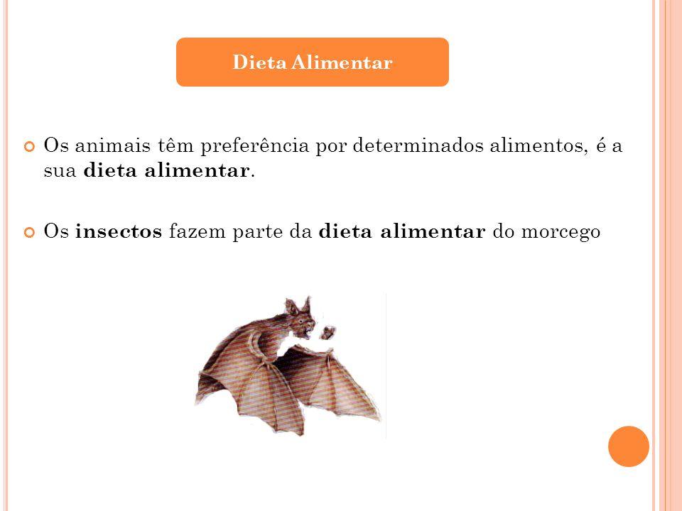 Os insectos fazem parte da dieta alimentar do morcego