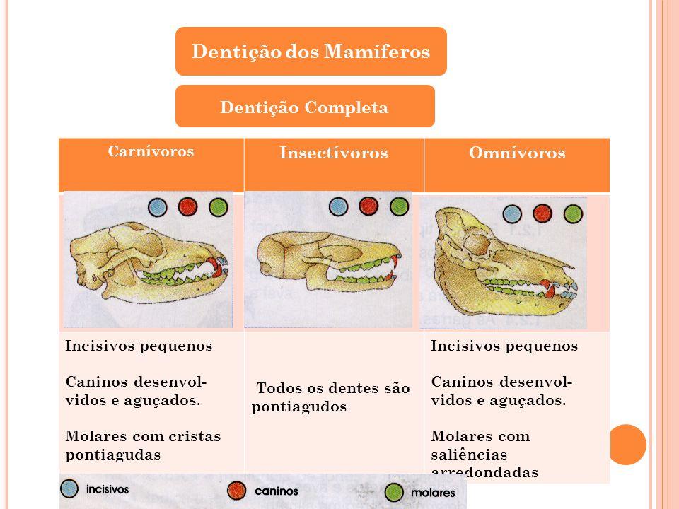 Dentição dos Mamíferos