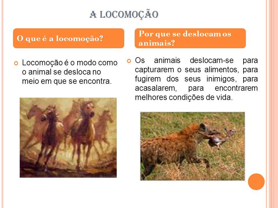 A LOCOMOÇÃO Por que se deslocam os animais O que é a locomoção