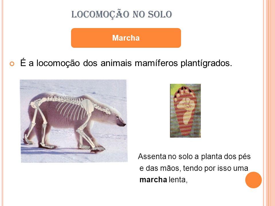 LOCOMOÇÃO NO SOLO É a locomoção dos animais mamíferos plantígrados.