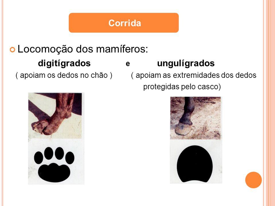 Locomoção dos mamíferos: