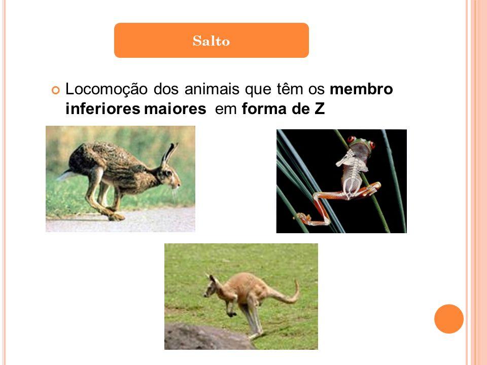 Salto Locomoção dos animais que têm os membro inferiores maiores em forma de Z