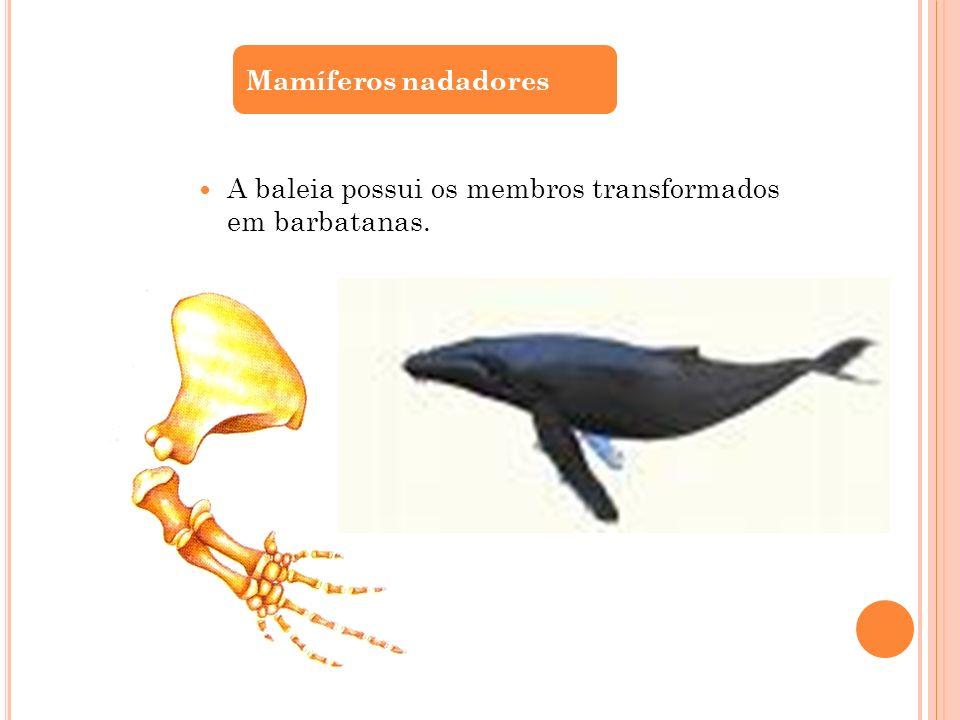 A baleia possui os membros transformados em barbatanas.