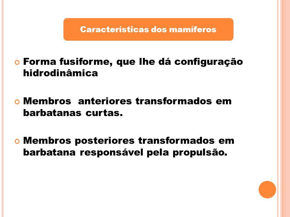 Características dos mamíferos