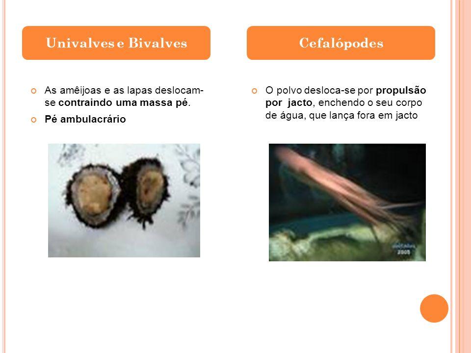 Univalves e Bivalves Cefalópodes