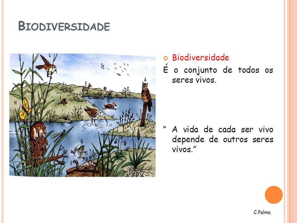 Biodiversidade Biodiversidade É o conjunto de todos os seres vivos.