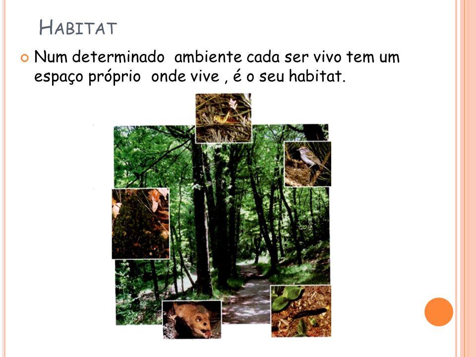 Habitat Num determinado ambiente cada ser vivo tem um espaço próprio onde vive , é o seu habitat.