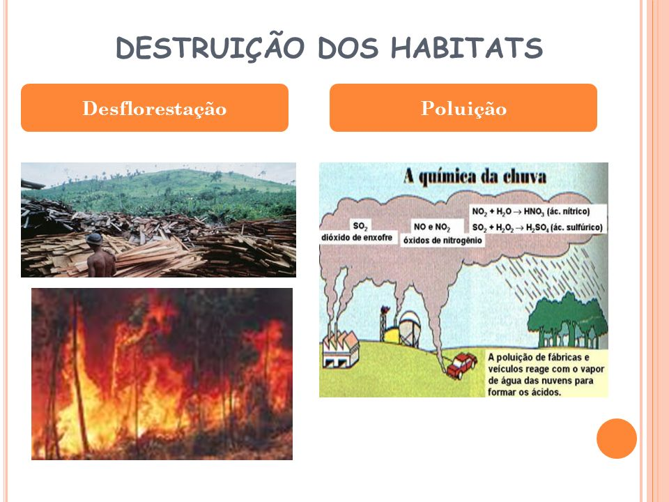 DESTRUIÇÃO DOS HABITATS