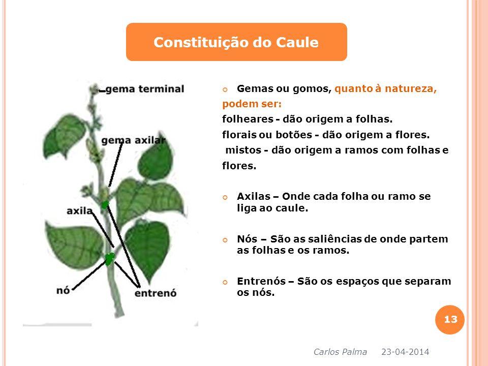 Constituição do Caule Gemas ou gomos, quanto à natureza, podem ser: