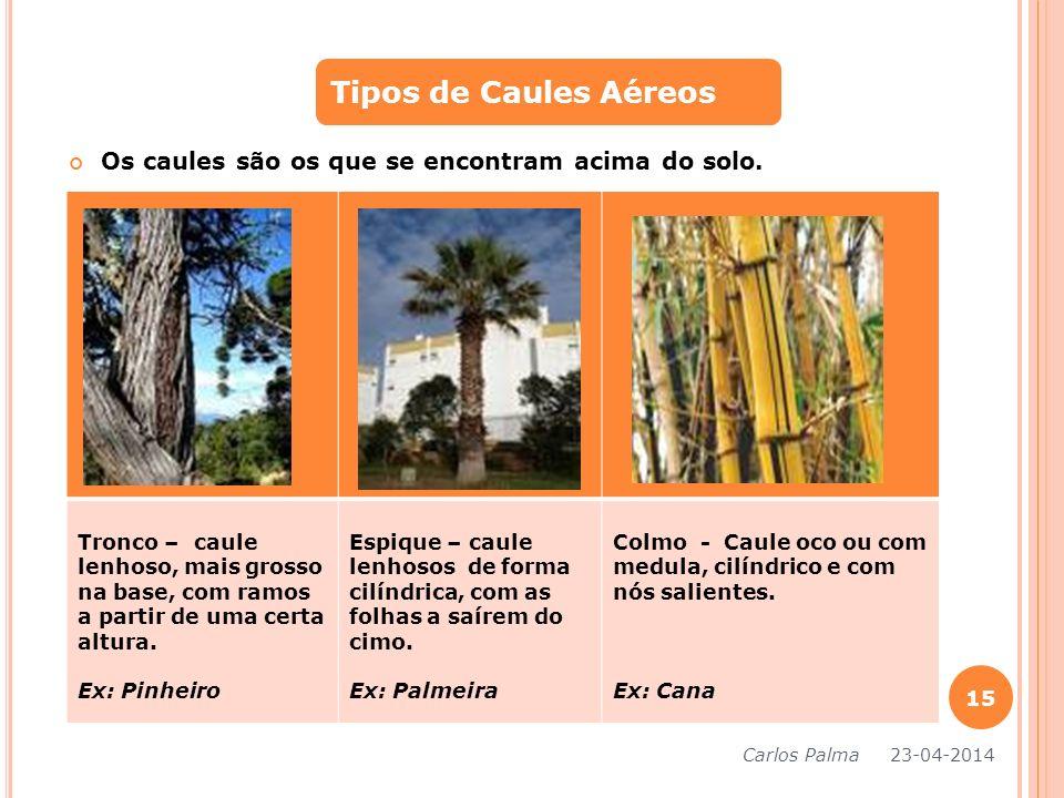 Tipos de Caules Aéreos Os caules são os que se encontram acima do solo.
