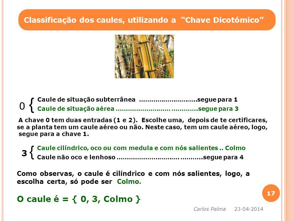 Classificação dos caules, utilizando a Chave Dicotómico