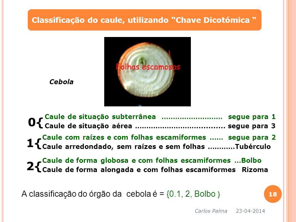 0{ 1{ 2{ A classificação do órgão da cebola é = {0.1, 2, Bolbo }