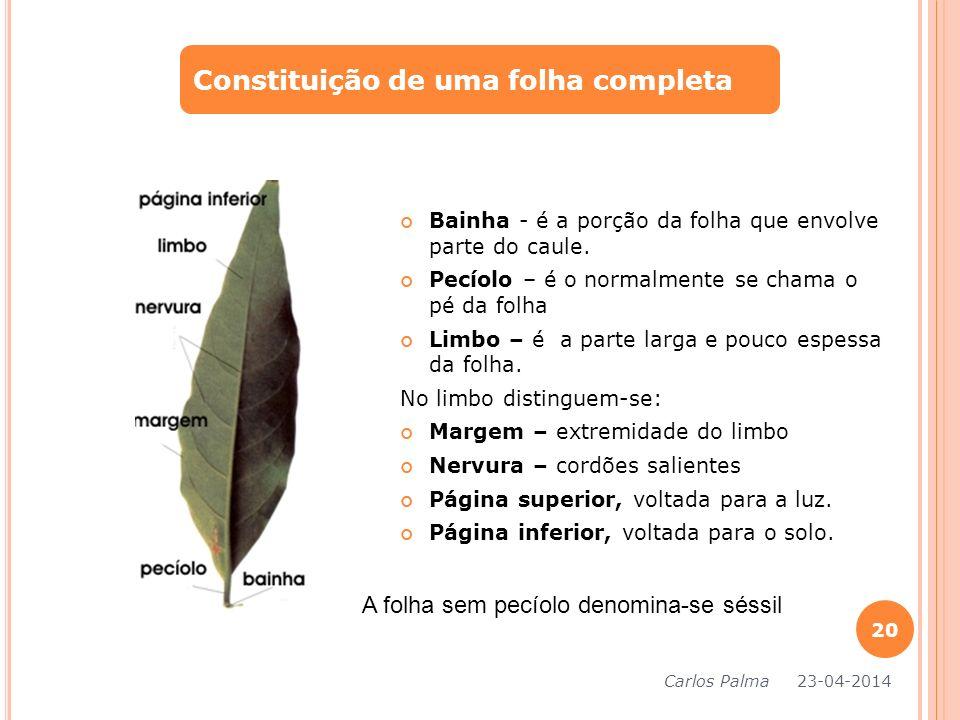 Constituição de uma folha completa