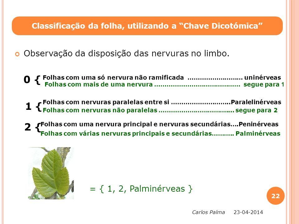 Classificação da folha, utilizando a Chave Dicotómica