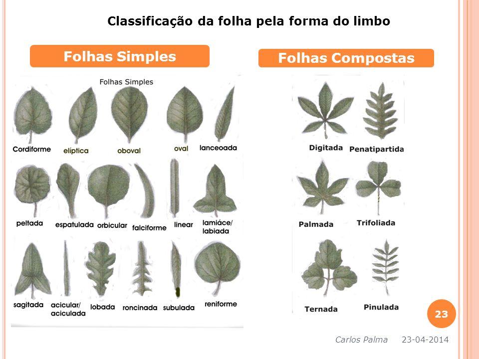 Classificação da folha pela forma do limbo