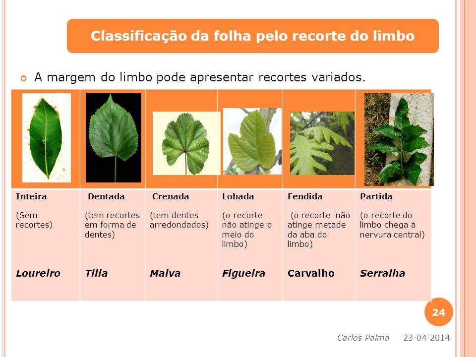 Classificação da folha pelo recorte do limbo