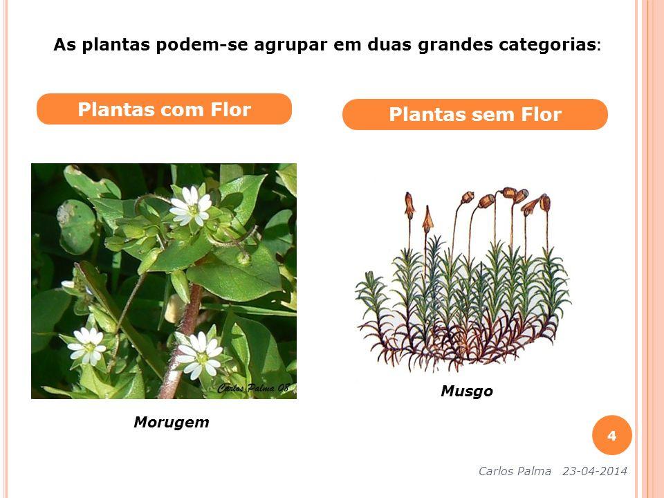 Plantas com Flor Plantas sem Flor