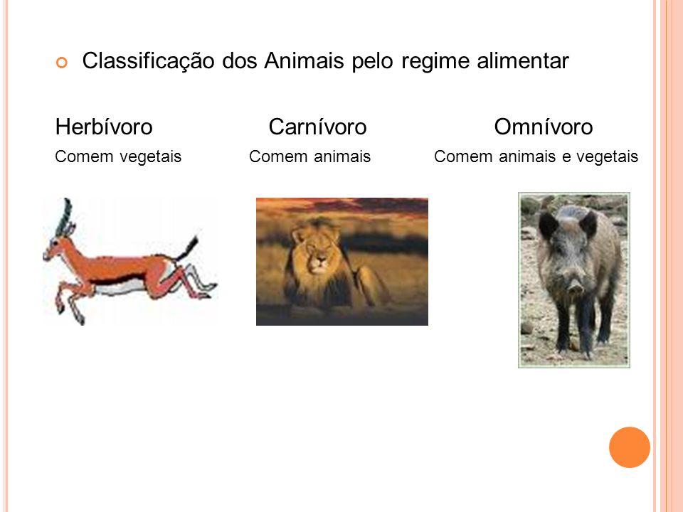 Classificação dos Animais pelo regime alimentar