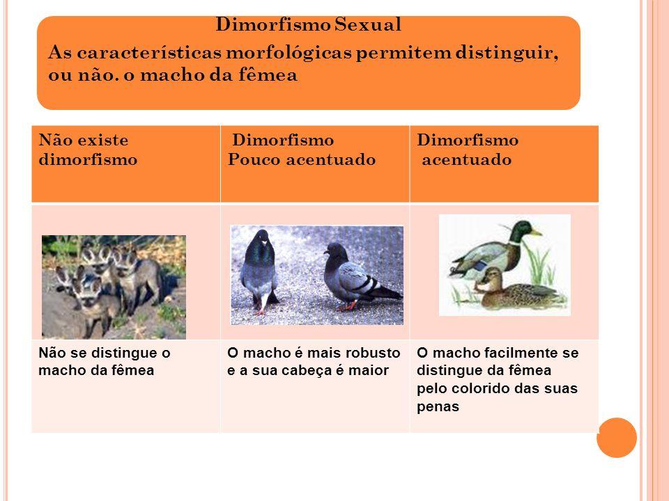 Dimorfismo SexualAs características morfológicas permitem distinguir, ou não. o macho da fêmea. Não existe dimorfismo.