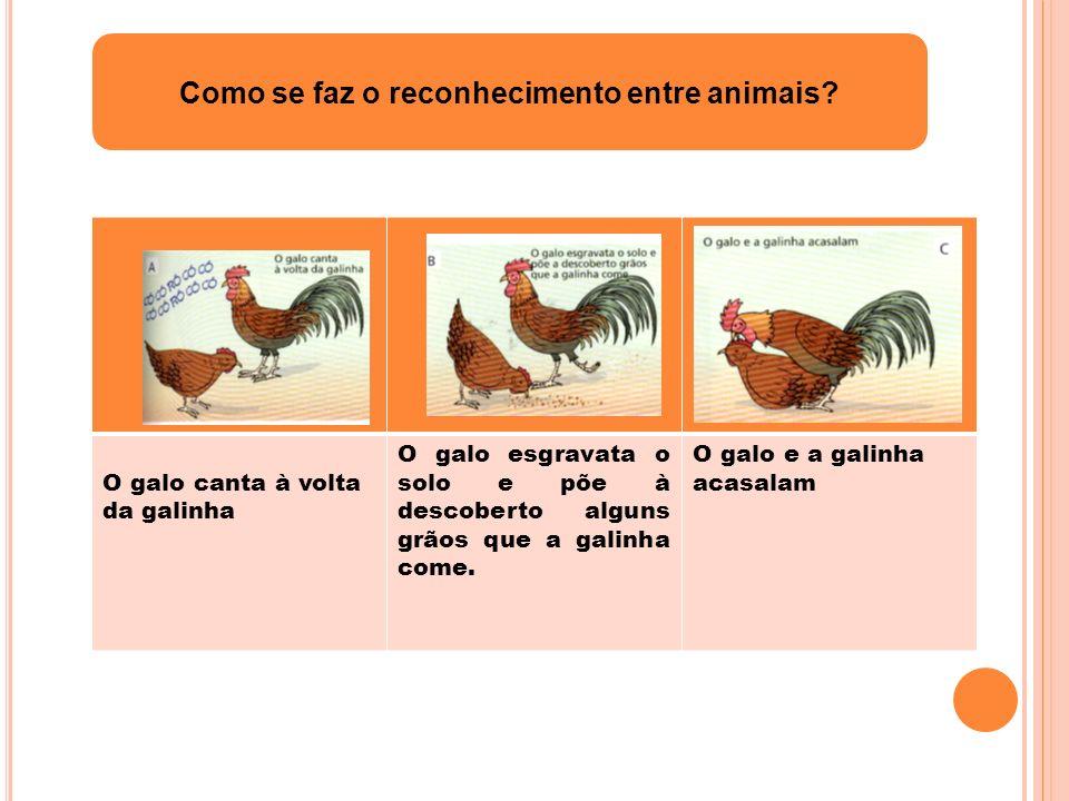 Como se faz o reconhecimento entre animais