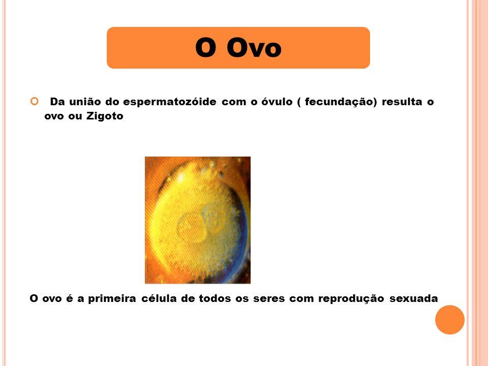 O Ovo Da união do espermatozóide com o óvulo ( fecundação) resulta o ovo ou Zigoto.