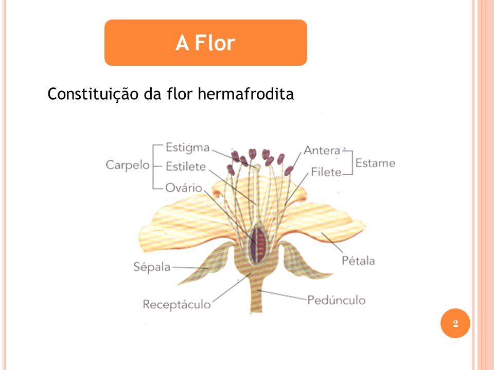 A Flor Constituição da flor hermafrodita