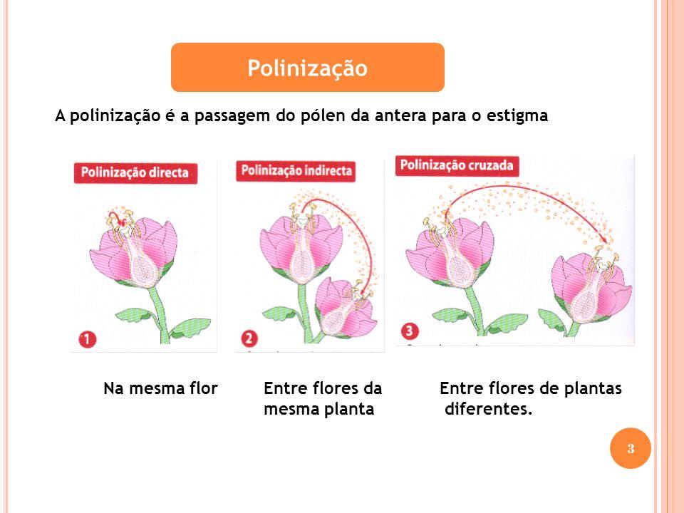 Polinização A polinização é a passagem do pólen da antera para o estigma. Na mesma flor. Entre flores da mesma planta.