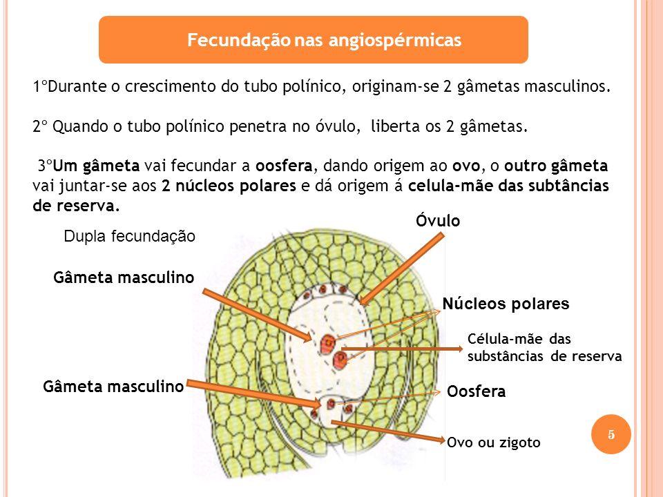 Fecundação nas angiospérmicas