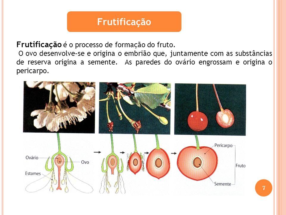Frutificação Frutificação é o processo de formação do fruto.
