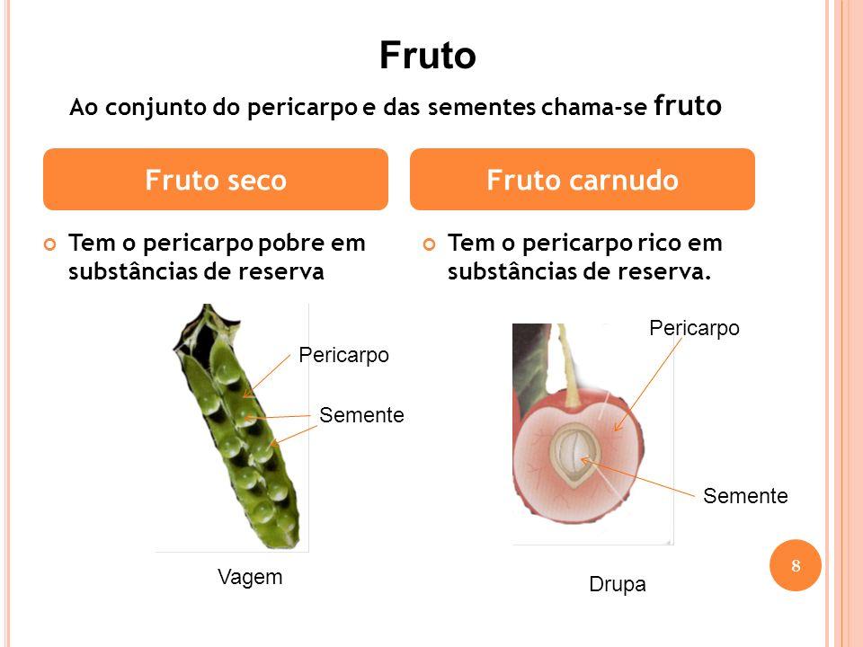 Fruto Fruto seco Fruto carnudo