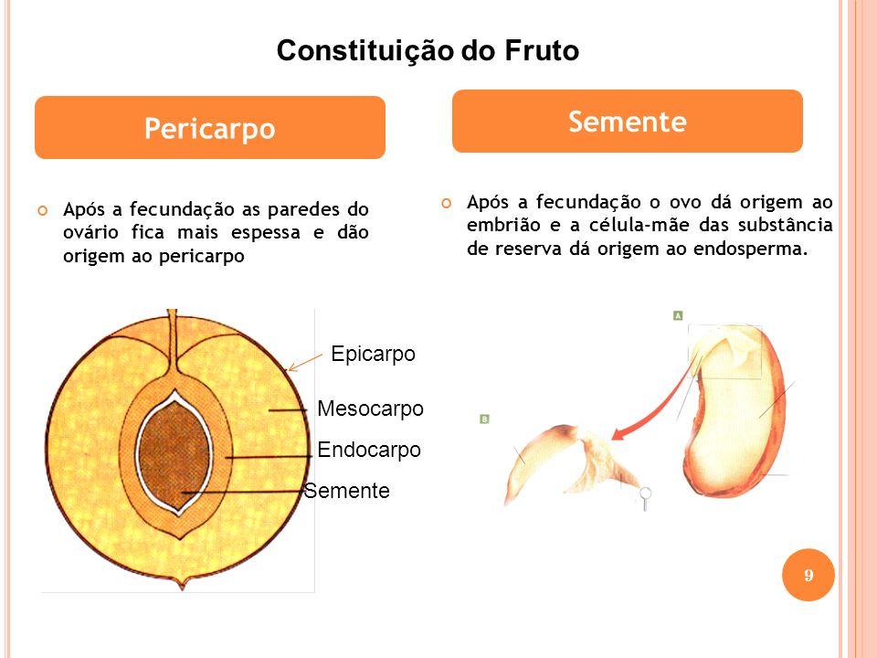 Constituição do Fruto Semente Pericarpo Epicarpo Mesocarpo Endocarpo