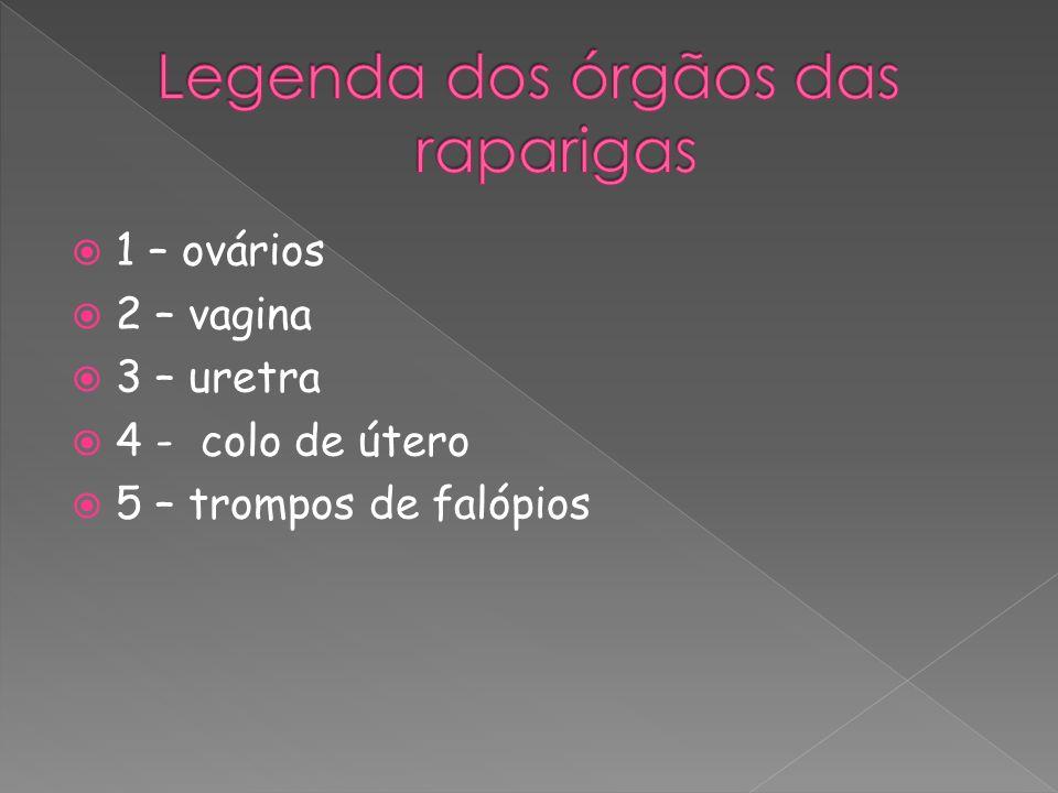 Legenda dos órgãos das raparigas