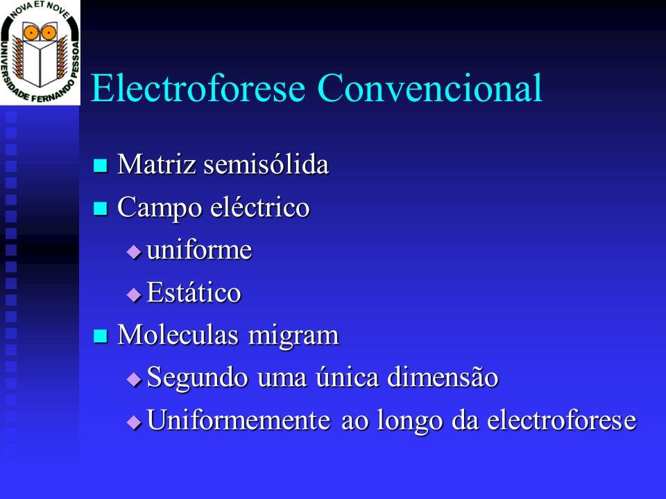Electroforese Convencional
