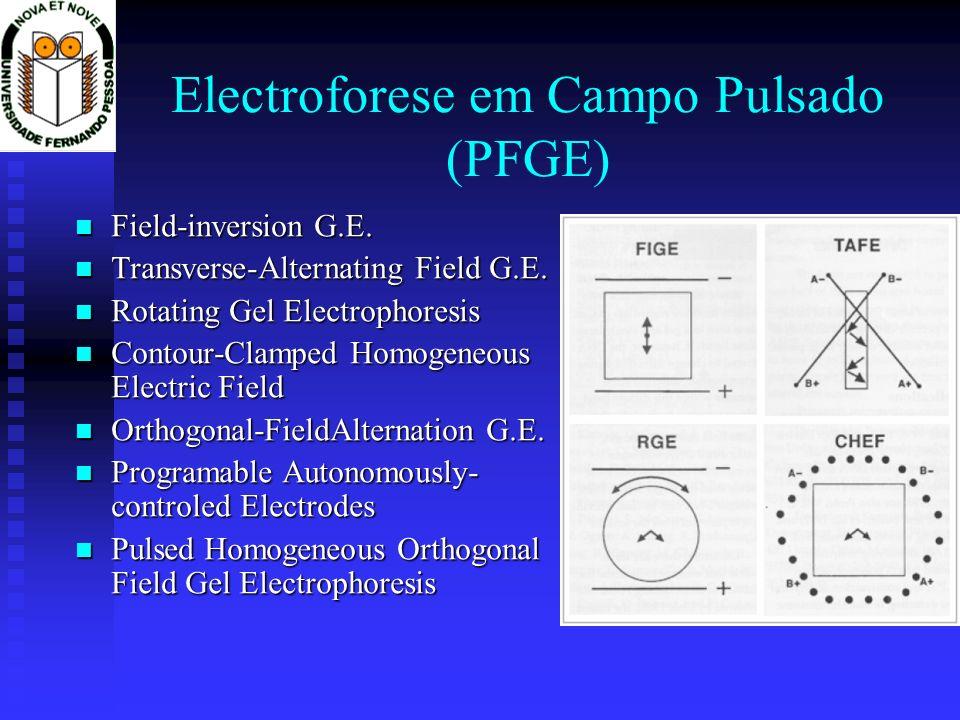 Electroforese em Campo Pulsado (PFGE)