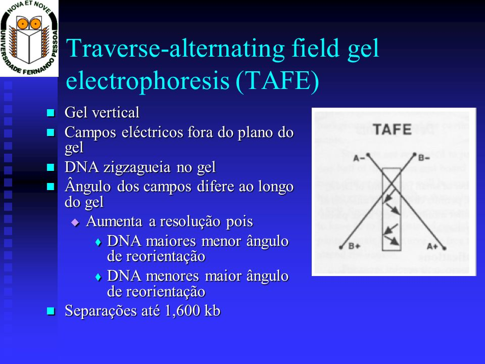Traverse-alternating field gel electrophoresis (TAFE)