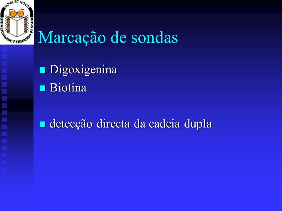 Marcação de sondas Digoxigenina Biotina
