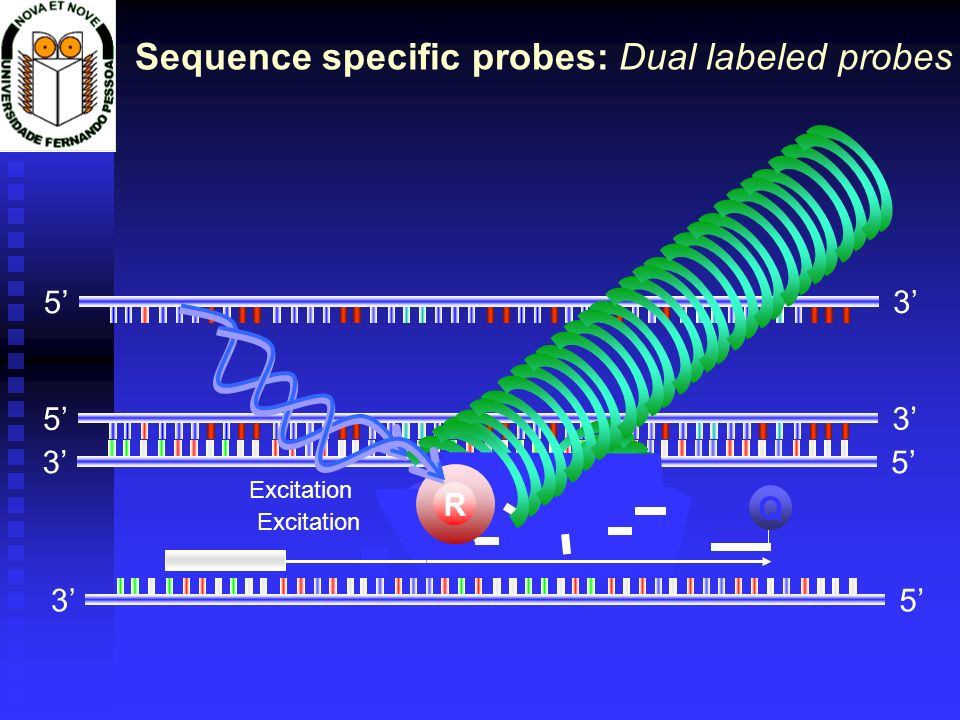 Sequence specific probes: Dual labeled probes
