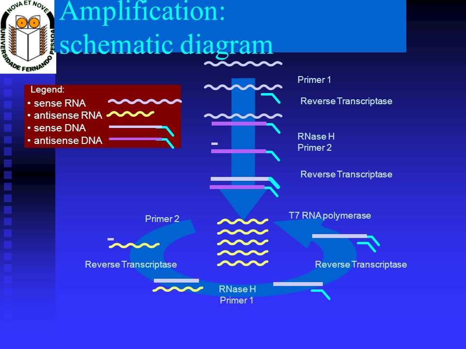 Amplification: schematic diagram