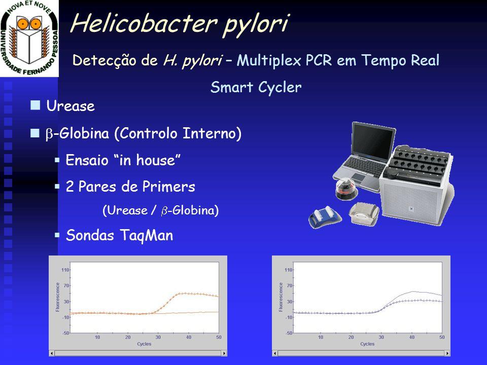 Detecção de H. pylori – Multiplex PCR em Tempo Real